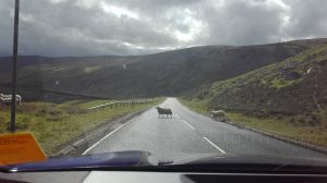 Schottland (1)